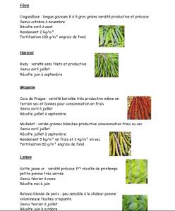fiche legumes4