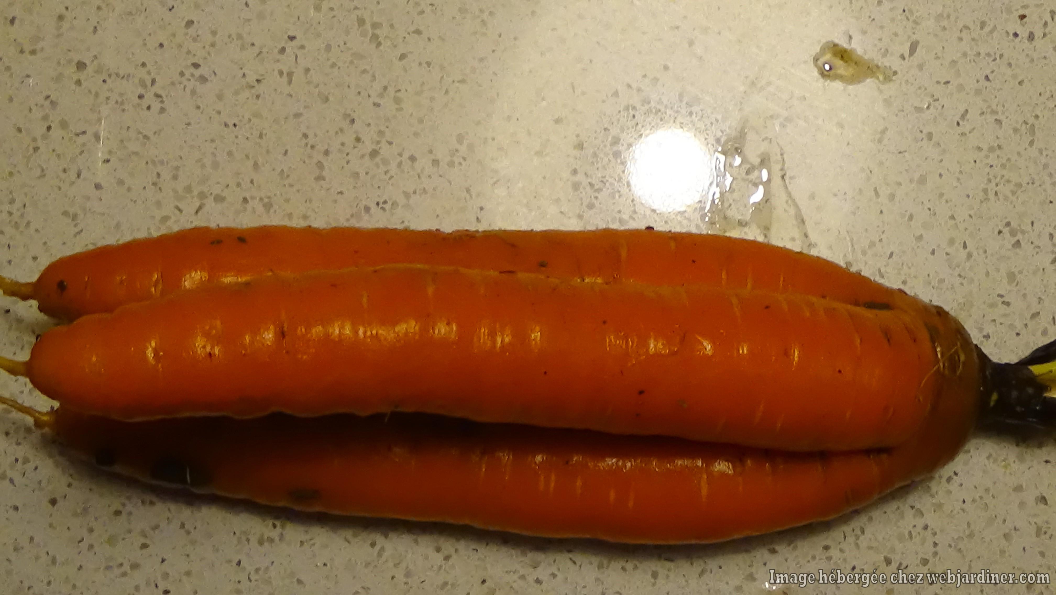 carottes001.jpg