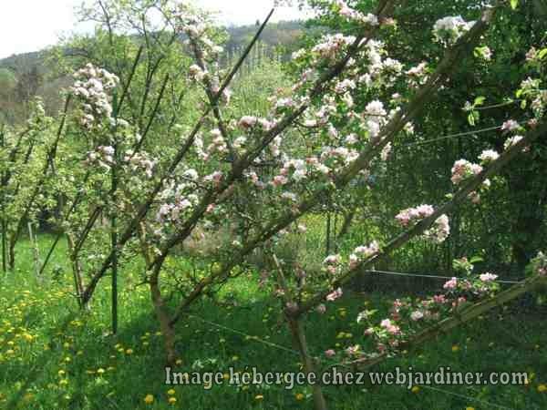 printemps2017011_web.jpg