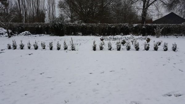 Potager sous la neige