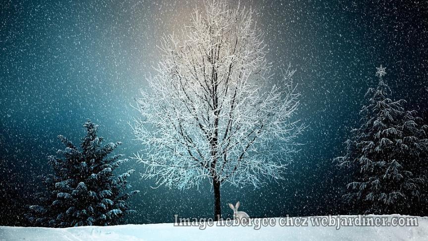 winter-2896970_960_720.jpg