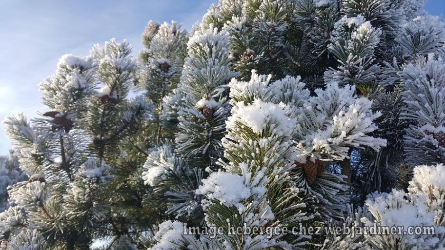 winter-2446590_960_720.jpg