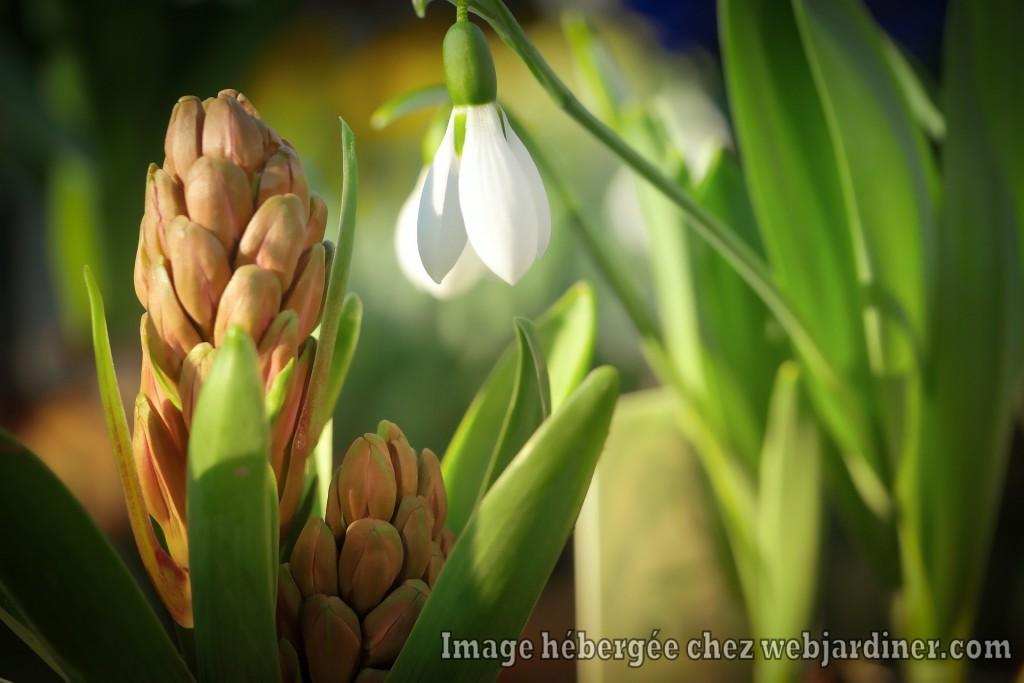 plant-3184891_1920.jpg