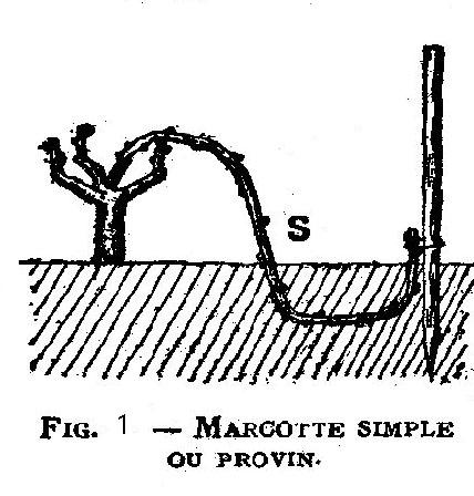 Le marcottage simple