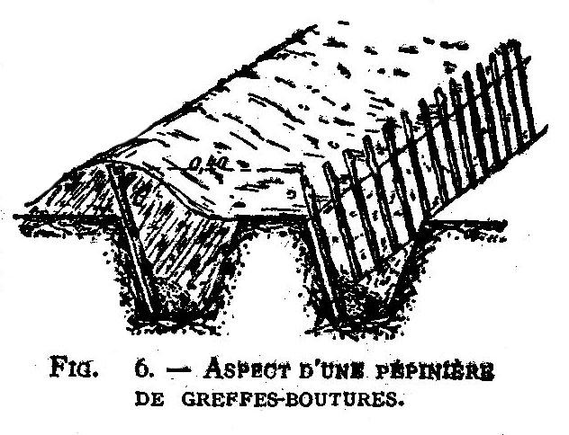 Pepinière de greffes